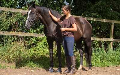 Paardenrevalidatie casus: Toulouse, 21-jarige merrie